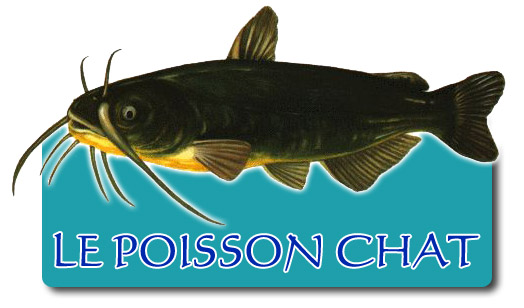 Poisson Chat